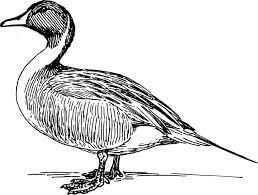 duck clip art at clker com vector clip art online royalty free