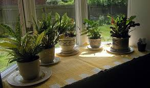 best low light indoor trees best indoor plants for low light indoor houseplants indirect light