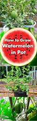 10 easy guides to grow vegetables u0026 fruits in containers gardens