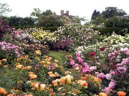 rose garden design garden design ideas