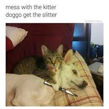 Cats Memes - 32 memes you ll only understand if you have cats on your home famepace
