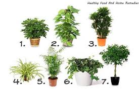 7 best houseplants to de stress your home and purify the air