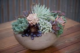 succulent planter designs succulent coffee table planter