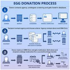 80 best egg donor images on pinterest egg donation eggs and