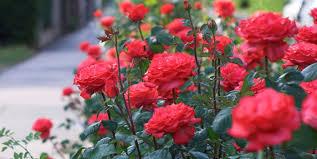 beautiful plants amazingly beautiful top 25 flowering plants livinghours