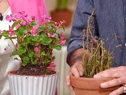 low maintenance houseplants hgtv