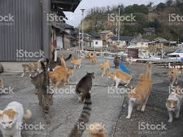 cat island pictures images and stock photos istock
