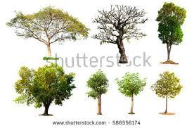 four seasons apple tree isolated on stock photo 134375054