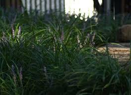 border plants low maintenance landscaping 17 great ideas bob
