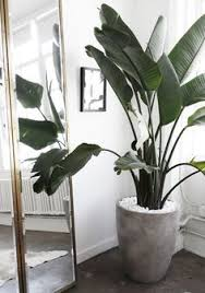 home interior plants feeling stressed try these 5 indoor plants plants gardens and