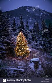 lighted christmas tree in forest of snow covered trees in stock