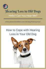 loss of dog dog hearing loss how to cope with hearing loss in your dog