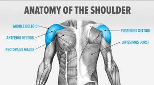 Posterior Shoulder Pain Bench Press All About Shoulder Pain