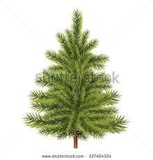 fir tree vector illustration stock vector 227404324