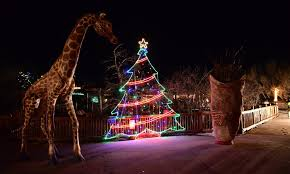 electric safari lights animals and holiday spirit in colorado