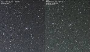 canon 6d black friday 2017 michael daniel ho the wildlife ho tographer canon eos 6d vs