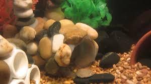 cheap aquarium decoration ideas aytsaid com amazing home ideas