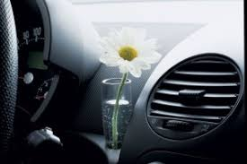 Beetle Flower Vase What U0027s So Special About These Cars