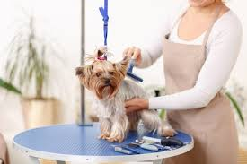 dog grooming tables for small dogs 11 best foldable dog grooming tables for small and large breeds