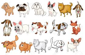 types of dogs illustration of the different breeds of dogs on a white background