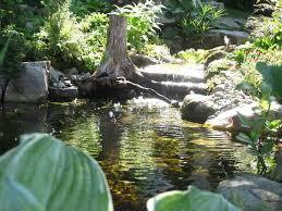 Is A Backyard Pond An Ecosystem Best 25 Natural Ecosystem Ideas On Pinterest Terrarium Plants