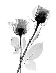 x ray roses tattoo tatting and tatoos