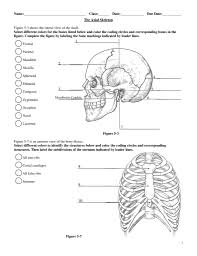 blank skeleton worksheet free worksheets library throughout axial