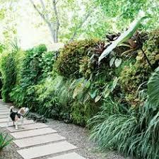 Best Plants For Vertical Garden - best plants for vertical garden walled garden living walls and