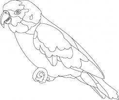 parrot u2013 alcatix
