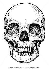 vector black and white illustration of human skull with a lower