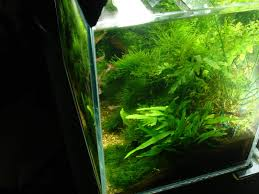 Aquascape Malaysia Aquascaping World Competition Gallery