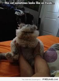 Ewok Memes - 23 cat looks like an ewok meme pmslweb