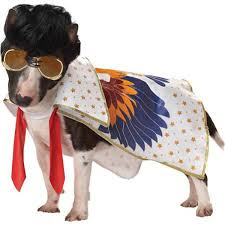 top 10 halloween costumes for girls halloween dog costume ideas 32 easy cute costumes for your