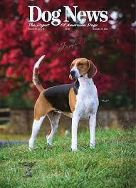 bichon frise z hter hessen dog news november 15 2013 by dn dog news issuu