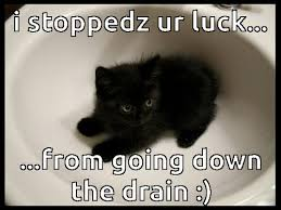 Good Luck Cat Meme - good luck cat uploaded by yanito freminoshi on we heart it