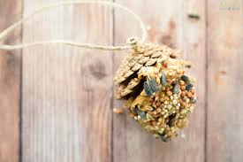 how to make the best pine cone bird feeder living