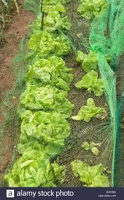 Vegetable Garden Netting Frame by Vegetable Garden Netting Zandalus Net