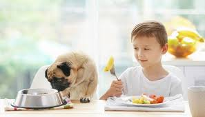 knowing how to deal with dog food allergies you for animal