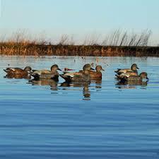 mackspw black friday duck decoys mallard pintails u0026 more mack u0027s pw