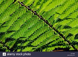 nz native plants list new zealand wellington otari wilton u0027s bush native botanic