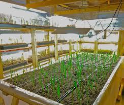 garlic spin farming u2013 a new way to learn to farm