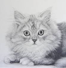 pet portraits how to draw fur in graphite