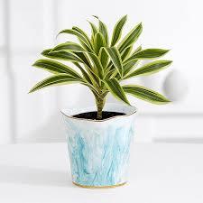 Plant Vase White Marble Pothos U2013 Shelfie Plant