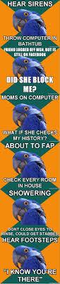 Paranoid Parrot Memes - paranoid parrot