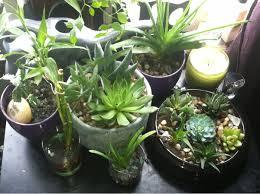 Indoor Kitchen Garden Ideas Hanging Indoor Herb Garden U2014 New Decoration How To Grow Indoor