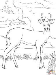 whitetail deer coloring page free printable coloring pages