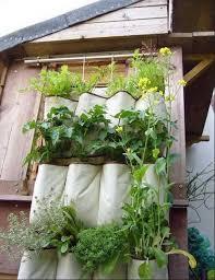 wall garden design decorating plants gardening ideas