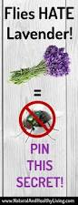 flies lavender natural and healthy living