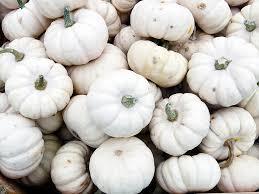 white pumpkins black white pumpkins no carve ideas gold pixel