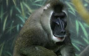 zoo bring dead animals u0027jurassic park u0027 style